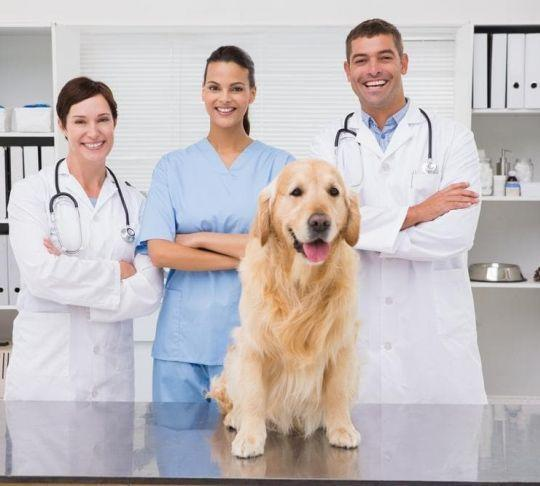veterinarians in office with dog